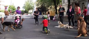 Hund Moabit, Hundauslaufgebiet Berlin, Hunde Moabit, Hundeauslauf Moabit, Hundeauslaufgebiet Moabit, Hundegarten, Hundegarten Moabit, Hundeplatz Moabit